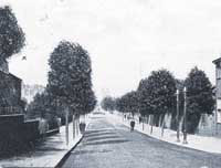 Greener times: London Road was once lined with trees